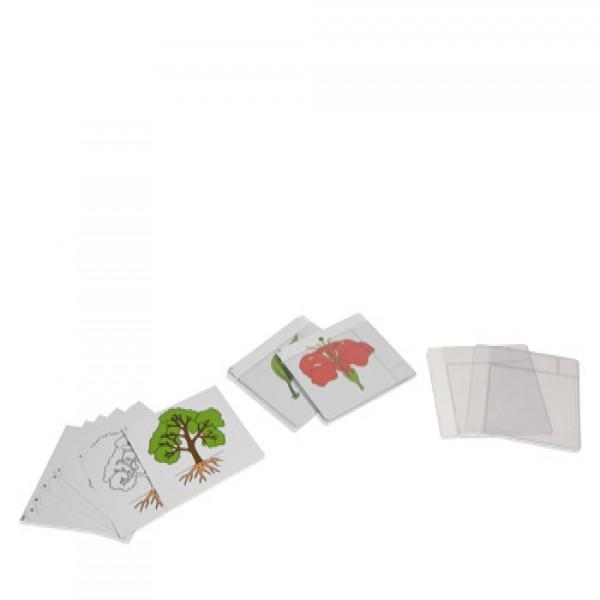 Bộ thẻ thực vật học đầu tiên