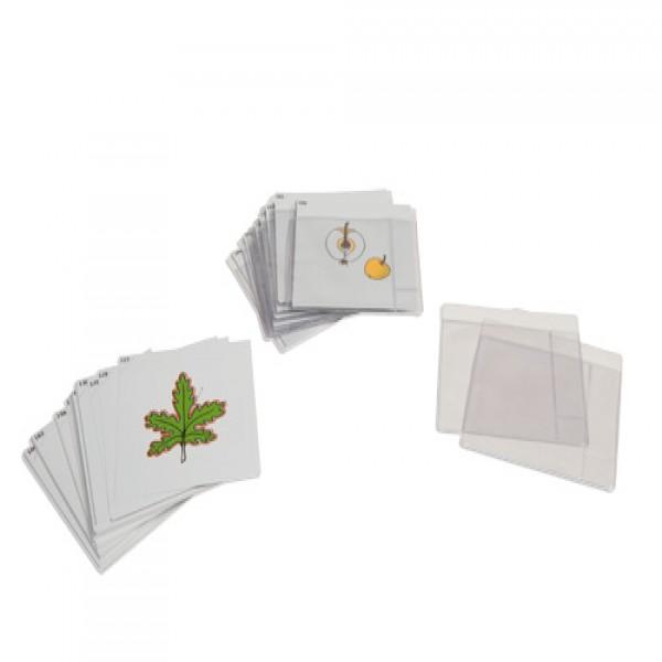 Bộ thẻ thực vật học thứ ba