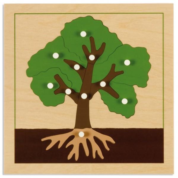 Bảng xếp hình thực vật: Cây
