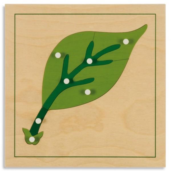 Bảng xếp hình thực vật: Lá