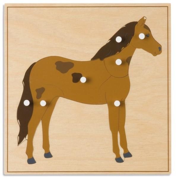 Bảng xếp hình động vật: Con ngựa