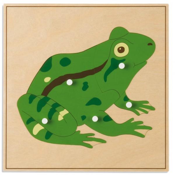 Bảng xếp hình động vật: Con ếch