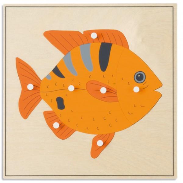 Bảng xếp hình động vật: Con cá