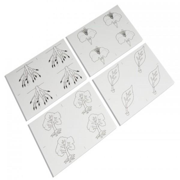 Các thẻ hình vẽ thực vật